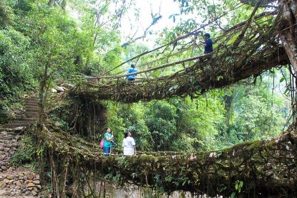 India Natural Wonders - Root Bridges