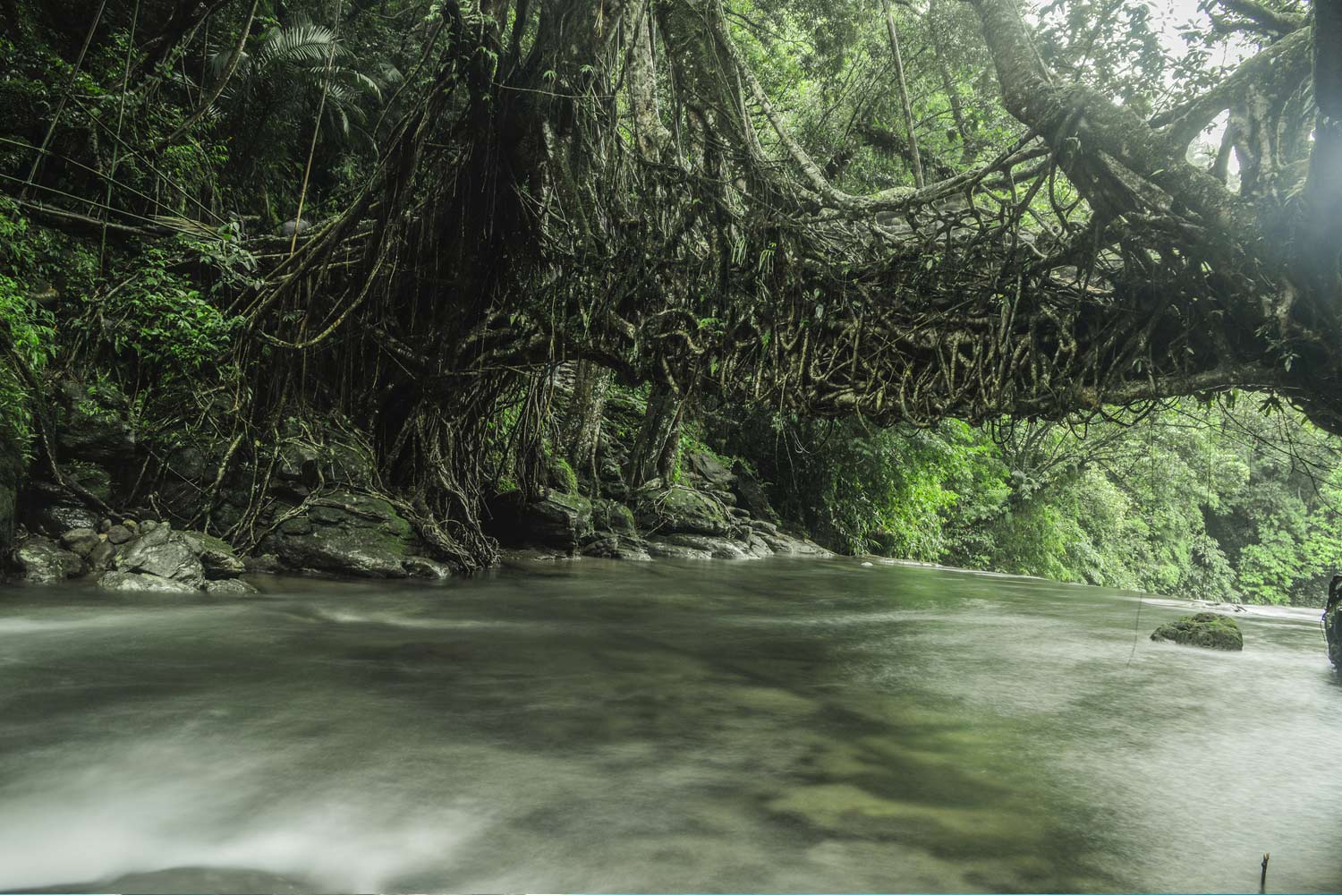 Interesting Places In India-Bridges Made From Living Roots: Cherrapunji