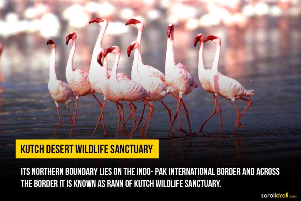 Kutch wildlife century