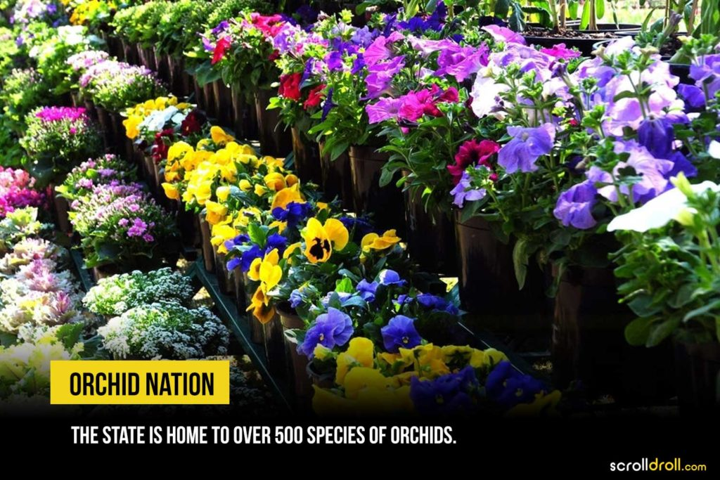 orchid nation