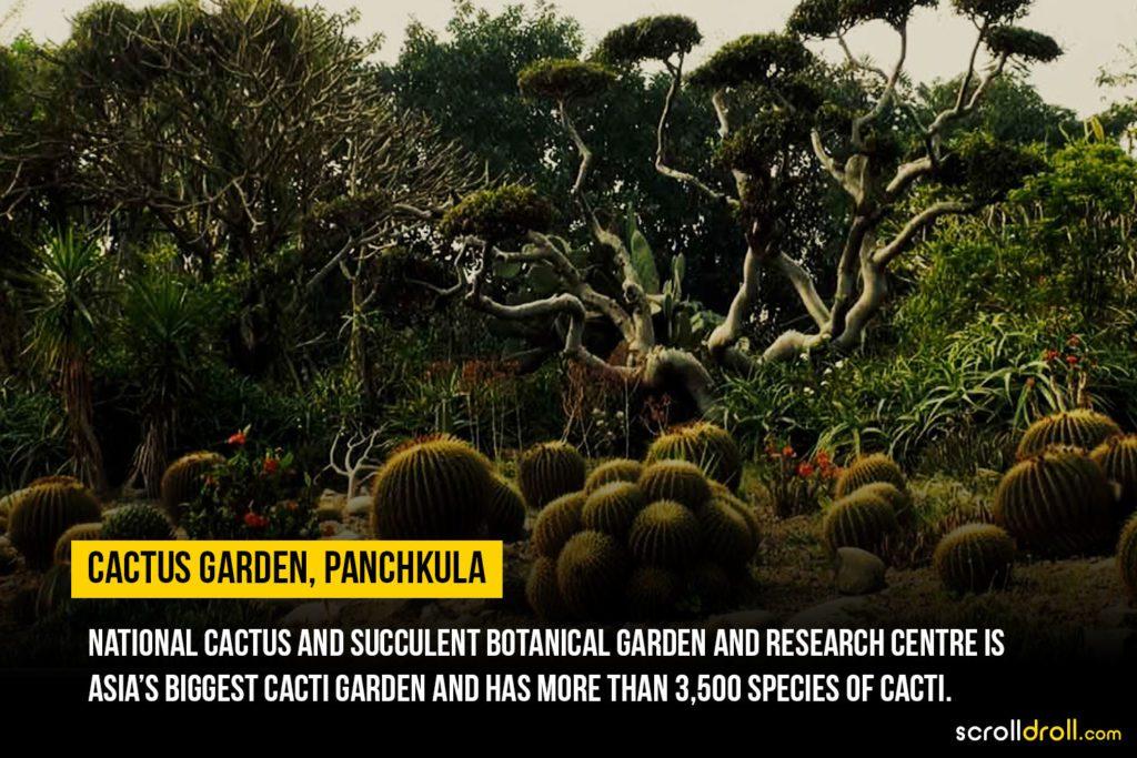 Cactus Garden, Panchkula