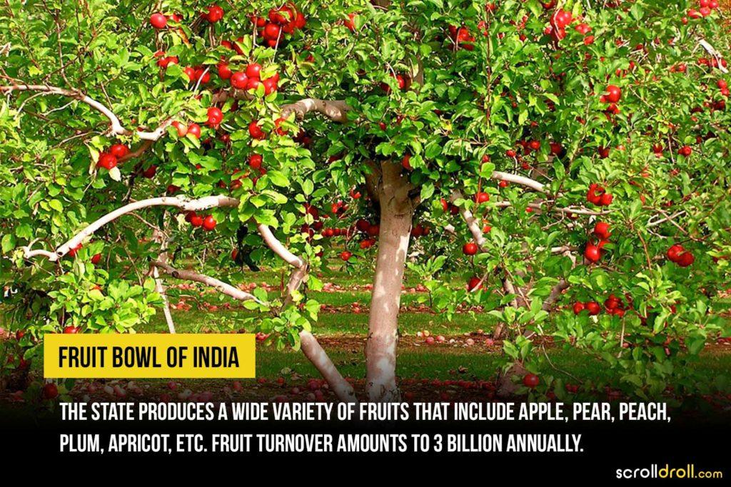 Fruit Bowl of India