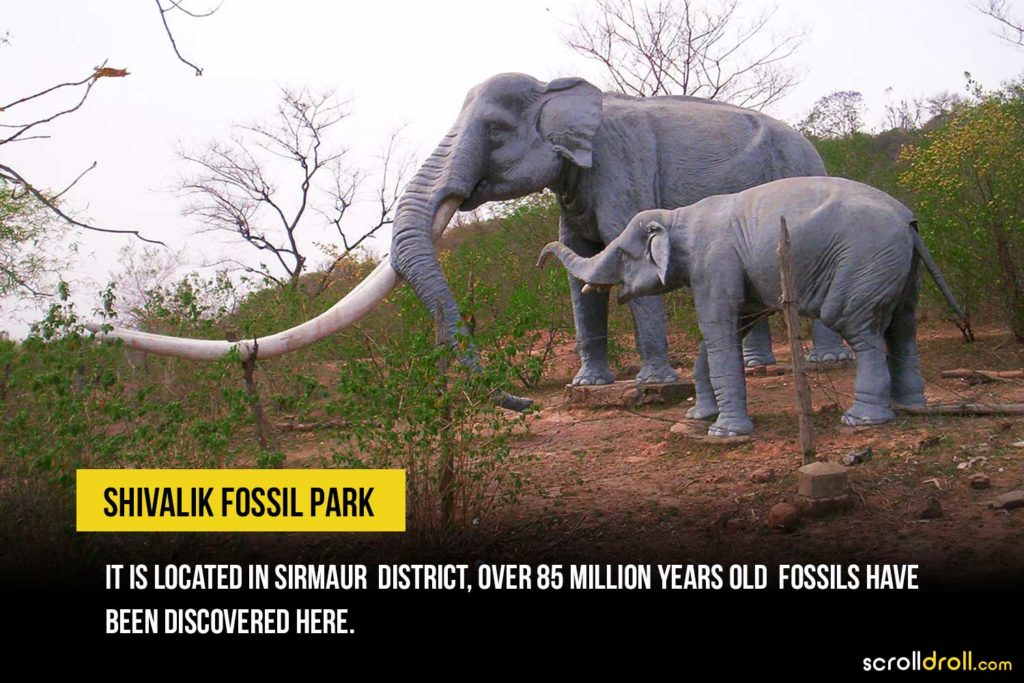 Shivalik Fossil Park