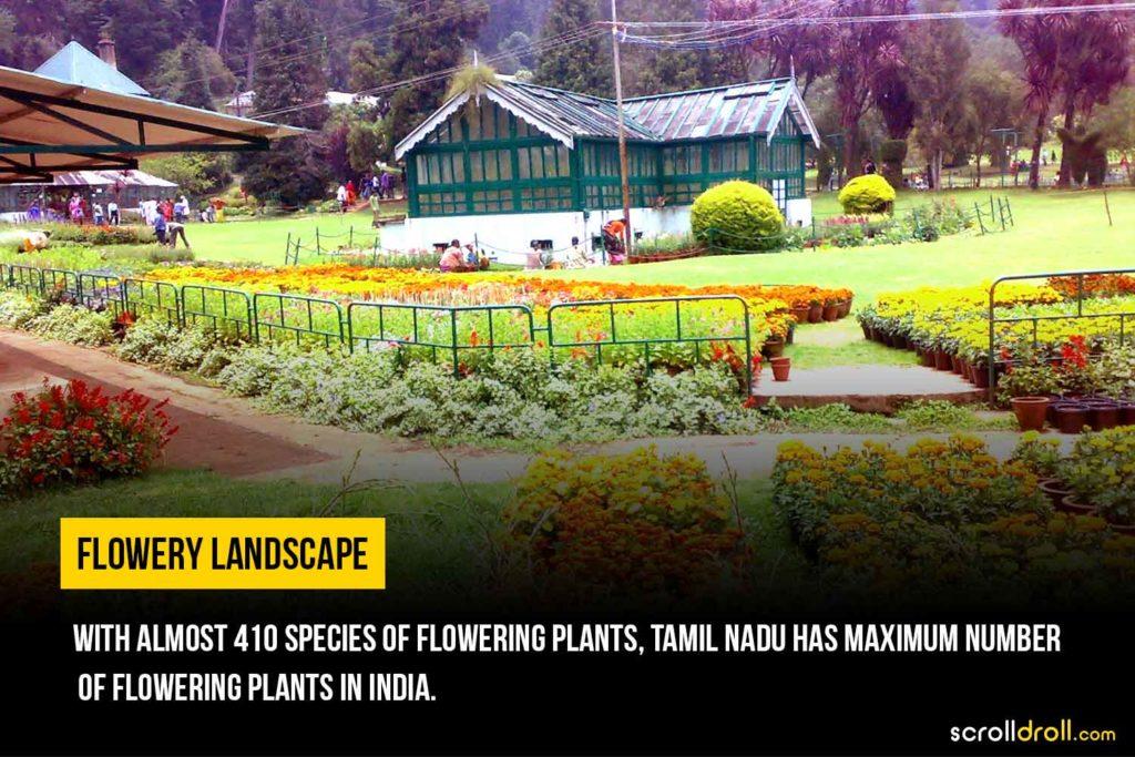 410 species of flowering plants